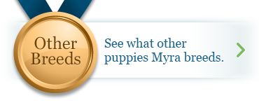 See what other puppies Myra breeds