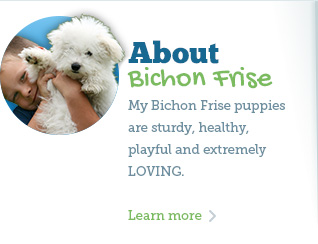 Learn about my Bichon Frise puppies