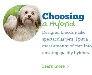 See my quality hybrid breeds